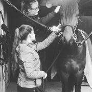 Equestrian News Dressage Horses Voskens